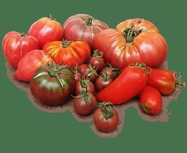 el mejor tomate del mundo, rústico, ecologico y biodinámico; variedades hairloom, beefsteak.